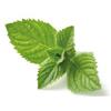 Sustrato de fibra de coco para plantas aromaticas