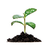 Sustrato de fibra de coco para plantas vivero